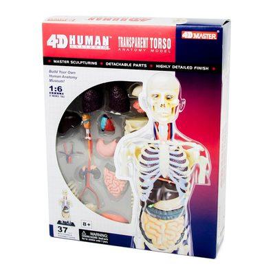 Конструктори з унікальними деталями - Об ємна збірна анатомічна модель  Прозорий тулуб людини 4D Master 35f50e976ced3
